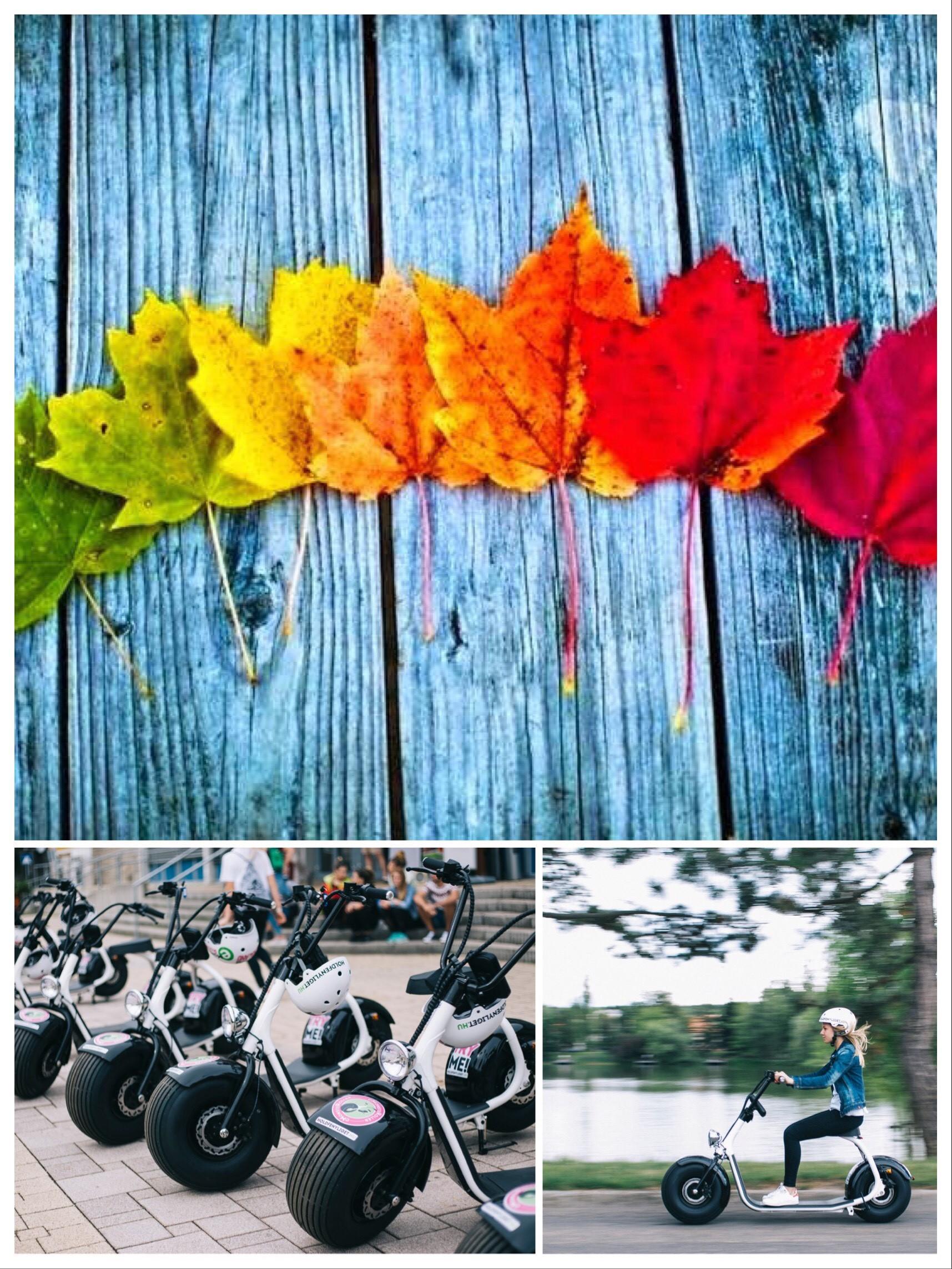 ősz csomga
